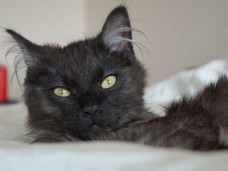 Um gesund zu bleiben, brauchen Katzen einen ausgewogenen Nährstoffmix im Futter. Der Katzenfutter-Test zeigte hier erhebliche Unterschiede beim Katzenfutter auf. Und: teuer ist nicht immer gut. (Foto: Markus Burgdorf)